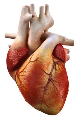 cara mengobati penyakit jantung dengan mudah